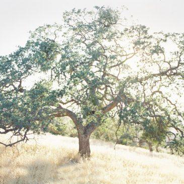 What is Life Balance Method?