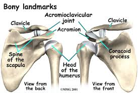 Acupuncture Balance Method can be a solution for Shoulder Blade / Scapula muscle pain.